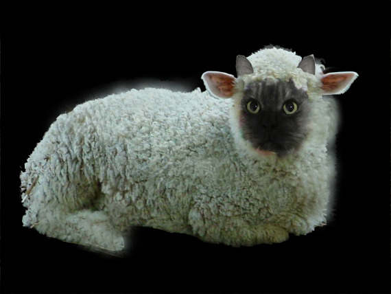 Cesar Sheep Black Background 50KB